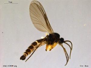 (Trichosia glabra - bf-sci-00084)  @12 [ ] CreativeCommons - Attribution Share-Alike (2014) OlsenGammelmo BioFokus