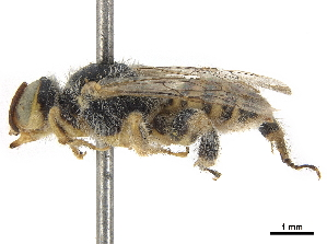(Pararhophites orobinus - CCDB-32132-G12)  @11 [ ] CreativeCommons - Attribution Non-Commercial Share-Alike (2018) CBG Photography Group Centre for Biodiversity Genomics