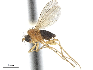 (Achalcinae - CCDB-32963-F09)  @11 [ ] CreativeCommons - Attribution Non-Commercial Share-Alike (2019) CBG Photography Group Centre for Biodiversity Genomics