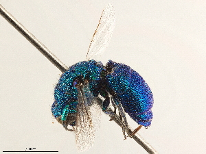 (Pleurochrysis - CCDB-34061-D09)  @11 [ ] CreativeCommons - Attribution Non-Commercial Share-Alike (2019) CBG Photography Group Centre for Biodiversity Genomics