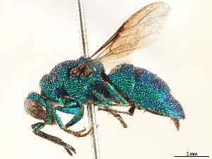 (Neochrysis - CCDB-34077-B10)  @11 [ ] CreativeCommons - Attribution Non-Commercial Share-Alike (2019) CBG Photography Group Centre for Biodiversity Genomics