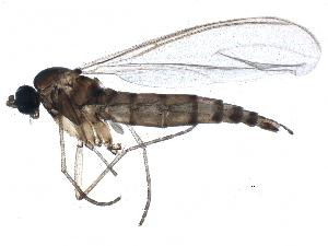 (Claustropyga acanthostyla - BIOUG22033-F06)  @15 [ ] CC-0 (2015) CBG Photography Group Centre for Biodiversity Genomics