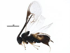 (Cotesia hyphantriae - BIOUG25580-E07)  @14 [ ] CC-0 (2015) CBG Photography Group Centre for Biodiversity Genomics