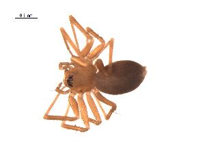 (Flagelliphantes - BIOUG00605-G08)  @14 [ ] Copyright  G. Blagoev 2010 Unspecified