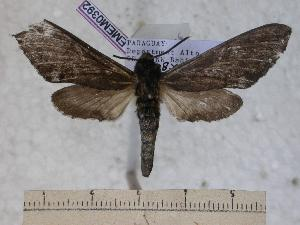 (Neogene - BC-EMEM0392)  @14 [ ] Copyright (2010) Ulf Eitschberger Research Collection of Ulf Eitschberger