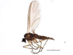 (Camptochaeta consimilis - BIOUG05053-C08)  @13 [ ] CC-0 (2014) CBG Photography Group Centre for Biodiversity Genomics