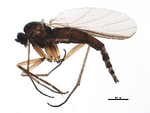 (Trichosia diota - BIOUG06478-B02)  @14 [ ] CC-0 (2014) CBG Photography Group Centre for Biodiversity Genomics