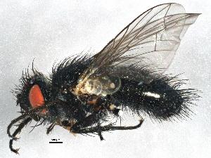 (Madremyia - BIOUG06317-G07)  @15 [ ] CC-0 (2014) CBG Photography Group Centre for Biodiversity Genomics