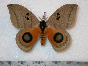 ( - BC-Dec0685)  @15 [ ] Copyright (2010) Thibaud Decaens Research Collection of Thibaud Decaens