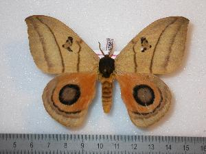 ( - BC-Dec0687)  @13 [ ] Copyright (2010) Thibaud Decaens Research Collection of Thibaud Decaens