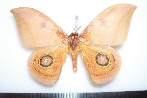 ( - BC-Dec1188)  @14 [ ] Copyright (2010) Thibaud Decaens Research Collection of Thibaud Decaens