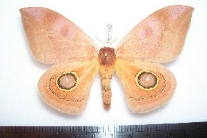 ( - BC-Dec1190)  @13 [ ] Copyright (2010) Thibaud Decaens Research Collection of Thibaud Decaens