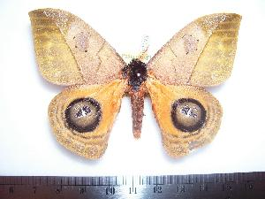 ( - BC-Dec1193)  @13 [ ] Copyright (2010) Thibaud Decaens Research Collection of Thibaud Decaens