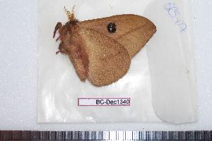 ( - BC-Dec1340)  @13 [ ] Copyright (2010) Thibaud Decaens Research Collection of Thibaud Decaens