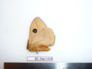 ( - BC-Dec1434)  @12 [ ] Copyright (2010) Thibaud Decaens Research Collection of Thibaud Decaens