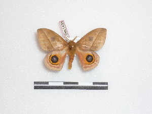 ( - BC-Dec1436)  @13 [ ] Copyright (2010) Thibaud Decaens Research Collection of Thibaud Decaens