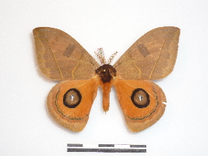 ( - BC-Dec1469)  @14 [ ] Copyright (2010) Thibaud Decaens Research Collection of Thibaud Decaens