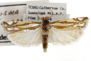 ( - TAMUICEGR-0288)  @13 [ ] CreativeCommons - Attribution Non-Commercial Share-Alike (2010) CBG Photography Group Centre for Biodiversity Genomics