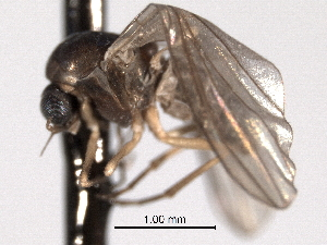 ( - CNC DIPTERA 192185)  @12 [ ] CreativeCommons - Attribution Non-Commercial Share-Alike (2012) CNC/BIO Photography Group Centre for Biodiversity Genomics