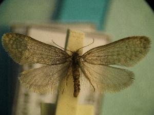 ( - CLV5119)  @12 [ ] Copyright (2012) Olivier Bouteleux Institut National de la Recherche Agronomique, Forestry Zoology