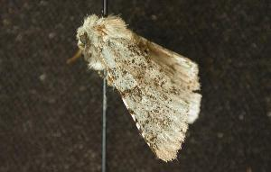( - moth159.01)  @13 [ ] CreativeCommons - Attribution Non-Commercial Share-Alike (2010) CBG Photography Group Centre for Biodiversity Genomics