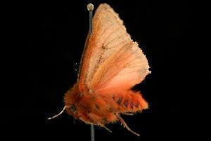 ( - MNBTT-965)  @12 [ ] CC-0 (2010) CBG Photography Group Centre for Biodiversity Genomics