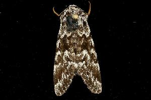 ( - MNBTT-1065)  @13 [ ] CC-0 (2010) CBG Photography Group Centre for Biodiversity Genomics