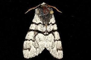 ( - MNBTT-1080)  @13 [ ] CC-0 (2010) CBG Photography Group Centre for Biodiversity Genomics