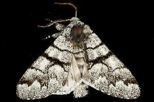 ( - MNBTT-1083)  @13 [ ] CC-0 (2010) CBG Photography Group Centre for Biodiversity Genomics