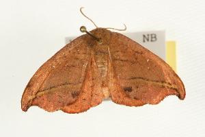 ( - MNBTT-3050)  @14 [ ] CC-0 (2010) CBG Photography Group Centre for Biodiversity Genomics