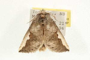 ( - MNBTT-3112)  @14 [ ] CC-0 (2010) CBG Photography Group Centre for Biodiversity Genomics