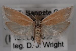 (Eucosma salmicolorana - 09-JBTOR-0650)  @13 [ ] CreativeCommons - Attribution Non-Commercial Share-Alike (2010) CBG Photography Group Centre for Biodiversity Genomics