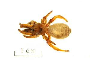 (Ctenizidae - BIOUG00198-D11)  @13 [ ] Copyright  G. Blagoev 2010 Unspecified