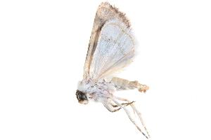 ( - BIOUG21703-E12)  @13 [ ] CreativeCommons - Attribution Non-Commercial Share-Alike (2015) CBG Photography Group Centre for Biodiversity Genomics