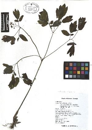 ( - TJD-021)  @11 [ ] CreativeCommons - Attribution Non-Commercial (2013) MTMG McGill Herbarium
