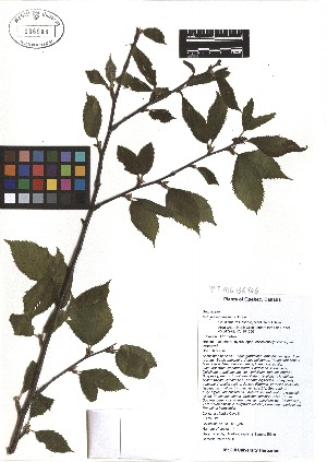 ( - TJD-048)  @11 [ ] CreativeCommons - Attribution Non-Commercial (2013) MTMG McGill Herbarium
