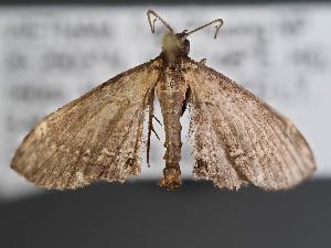 (Girida - VIETBIO-33399-H02)  @11 [ ] by-nc-sa (2020) SNSB, Staatliche Naturwissenschaftliche Sammlungen Bayerns ZSM (SNSB, Zoologische Staatssammlung Muenchen)