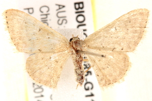 ( - BIOUG18085-G11)  @12 [ ] CreativeCommons - Attribution Non-Commercial Share-Alike (2015) CBG Photography Group Centre for Biodiversity Genomics