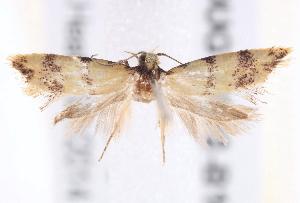 (Psaroxantha - BIOUG19292-B10)  @14 [ ] CreativeCommons - Attribution Non-Commercial Share-Alike (2015) CBG Photography Group Centre for Biodiversity Genomics