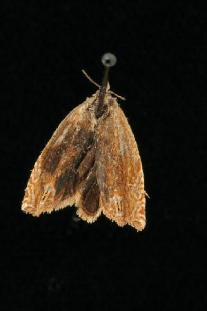 ( - 04HBL006536)  @13 [ ] CC-0 (2010) CBG Photography Group Centre for Biodiversity Genomics