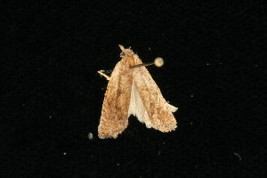 ( - 04HBL006769)  @13 [ ] CC-0 (2010) CBG Photography Group Centre for Biodiversity Genomics
