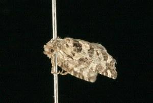 ( - 2005-ONT-493)  @13 [ ] CC-0 (2010) CBG Photography Group Centre for Biodiversity Genomics