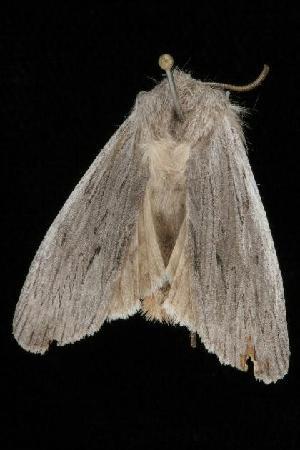 ( - Moth4039.03)  @13 [ ] CC-0 (2010) CBG Photography Group Centre for Biodiversity Genomics