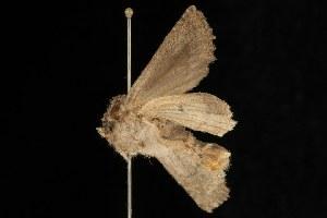 ( - Moth4254.03)  @13 [ ] CC-0 (2010) CBG Photography Group Centre for Biodiversity Genomics