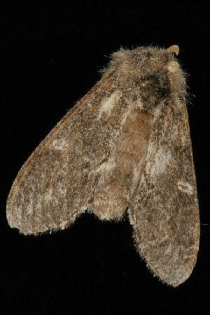 ( - Moth4313.03)  @13 [ ] CC-0 (2010) CBG Photography Group Centre for Biodiversity Genomics