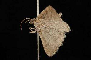 ( - Moth4328.03)  @13 [ ] CC-0 (2010) CBG Photography Group Centre for Biodiversity Genomics