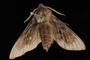 ( - Moth4360.03)  @14 [ ] CreativeCommons - Attribution Non-Commercial Share-Alike (2010) CBG Photography Group Centre for Biodiversity Genomics