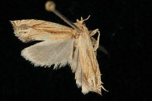 ( - 2005-ONT-1357)  @13 [ ] CC-0 (2010) CBG Photography Group Centre for Biodiversity Genomics