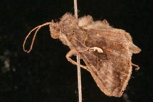 ( - 2005-ONT-897)  @13 [ ] CC-0 (2010) CBG Photography Group Centre for Biodiversity Genomics
