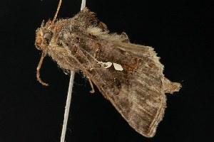 ( - 2005-ONT-1715)  @13 [ ] CC-0 (2010) CBG Photography Group Centre for Biodiversity Genomics